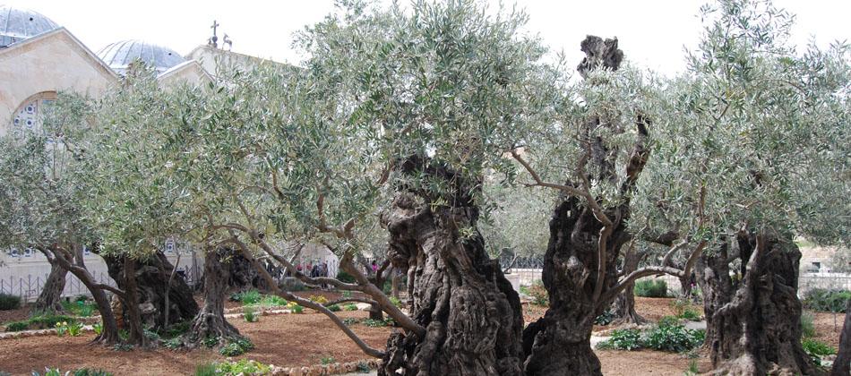 Huerto de los Olivos